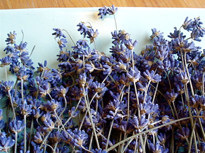 011509_Dried-Lavender