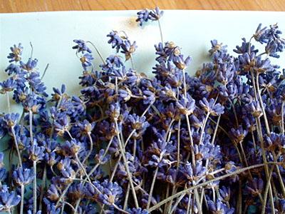 011509_Dried-Lavender